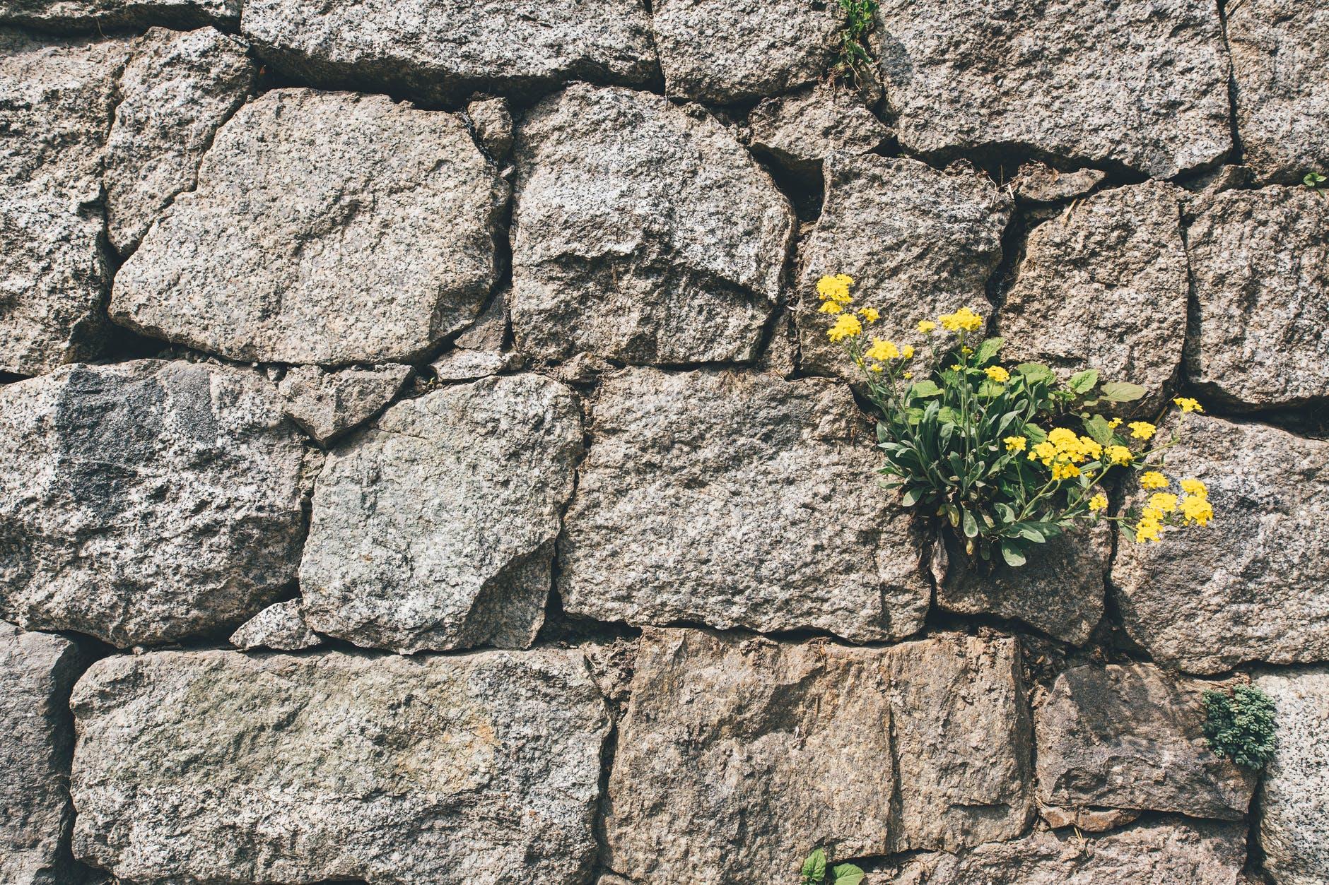 flowers summer rocks texture